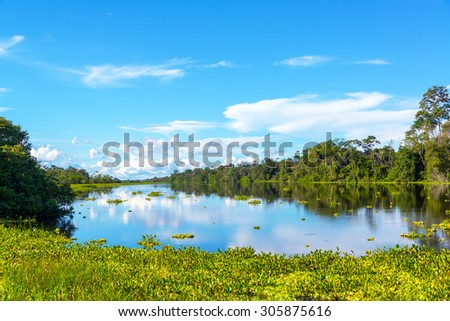 View of a river in the Amazon rain forest with aquatic plants in the foreground near Iquitos, Peru - stock photo