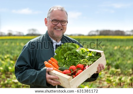 View of a Senior attractive farmer harvesting vegetables in a field - Nature concept