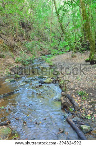 View of a stream within Garajonay National Park, la Gomera, Spain - stock photo