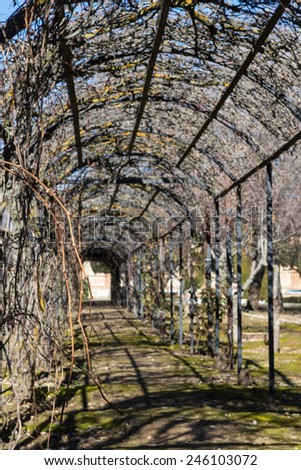 view of a tunnel produced by a metal structure, on which are entangled vines - stock photo