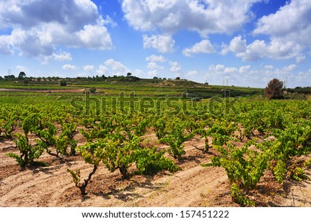 view of a vineyard with ripe grapes in Tarragona, Catalonia, Spain - stock photo
