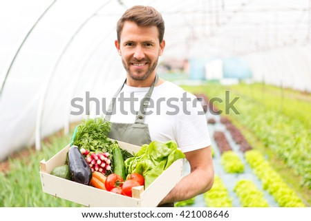 View of a Young attractive man harvesting vegetable in a greenhouse