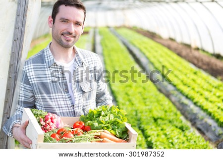 View of a Young attractive woman harvesting vegetable in a greenhouse