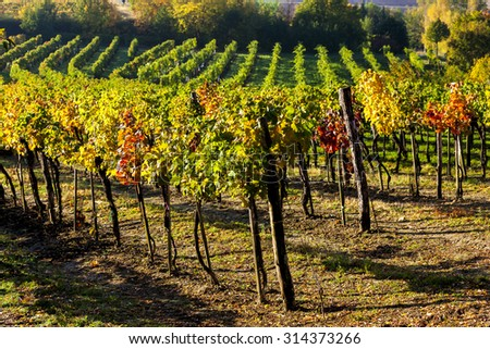 view of autumnal vineyards near Jetzelsdorf, Lower Austria, Austria - stock photo