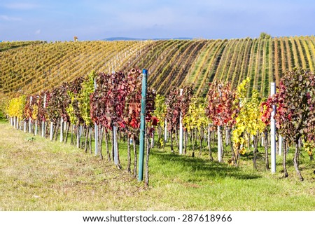 view of autumnal vineyards near Velke Bilovice, Czech Republic - stock photo