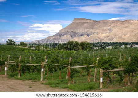 View of Book Cliff Mesas from Palisades Colorado vineyard at grape harvest - stock photo