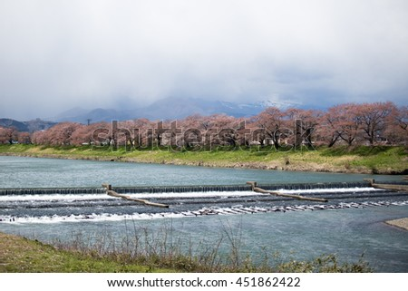 View of Cherry Blossom at Shiroishi river, Funaoka, Sendai, Japan