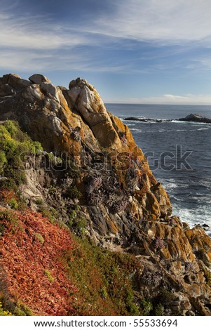 View of colorful flowers and algae on rugged coastline of Point Lobos State Natural Reserve in California - stock photo