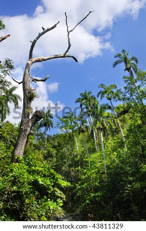 View of cuban countryside landscape with tropical vegetation at Sierra del Escambray, cuba - stock photo