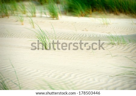 View of Dead Dunes, Curonian Spit and Curonian Lagoon, Nagliai, Nida, Klaipeda, Lithuania. Baltic Dunes. Unesco heritage. - stock photo