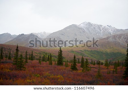 View of Denali National Park in late Summer showing the tundra in its Fall colors