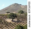 View of Edna Valley, California wine country with rows of grapevines, trees, and mountain. - stock photo