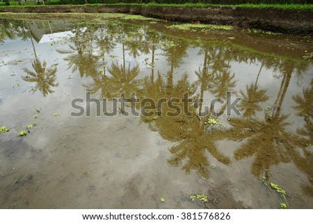 View of empty paddy fields and reflection of coconut trees and sky in Lombok. - stock photo