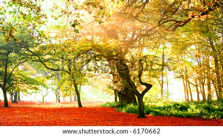 View of fabulous autumn forest bathed in glorious sunshine highlighting the gold, orange, yellow and red foliage.