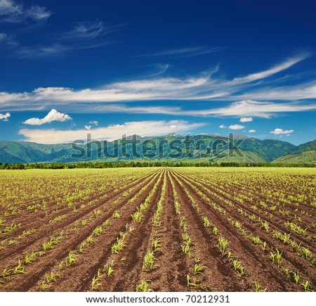 View of field with sprouting crops and blue sky - stock photo