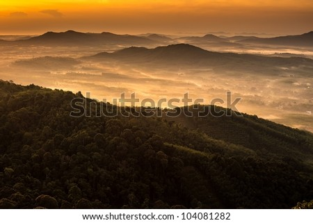 view of Forrest and mist - stock photo