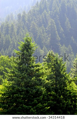 View of forrest of green pine trees on mountainside - stock photo