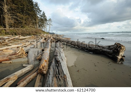 View of french beach, vancouver island, british columbia, canada