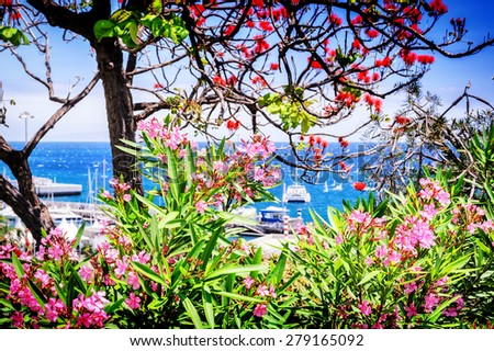 View of Funchal port through the blooming flowers. Madeira island - stock photo