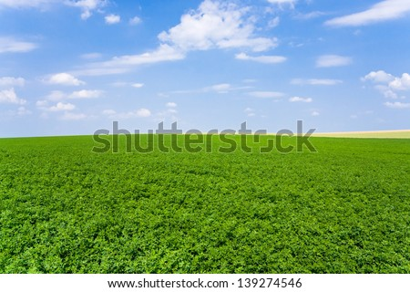 view of green lucerne plantation under blue sky in France - stock photo