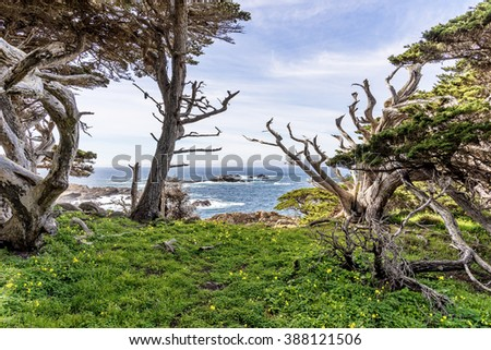 View of Headland Cove, on a crisp spring morning, Cypress trees, blue sea & sky, & unusual rock and geological formations, as seen from the North Shore Trail, at Point Lobos State Natural Reserve. - stock photo