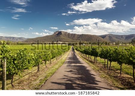 View of Hunter Valley vineyards, NSW, Australia - stock photo