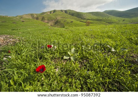 View of Landscape of Galilee, blooming poppies,Israel