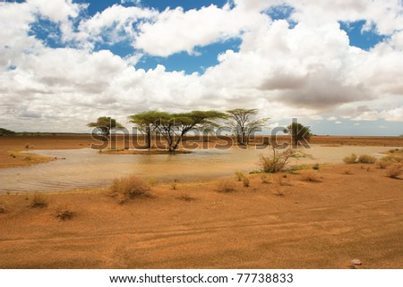 View of landscape with african trees in the background, Kenya - stock photo
