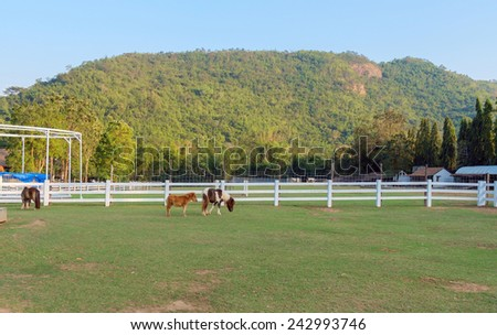 View of livestock. Dwarf horse in fence field with mountain background. - stock photo