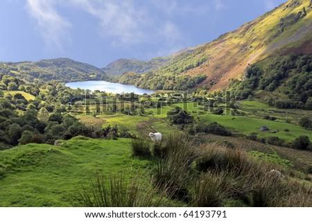 View of Llyn Gwynant in Snowdonia National Park Gwynedd North Wales - stock photo