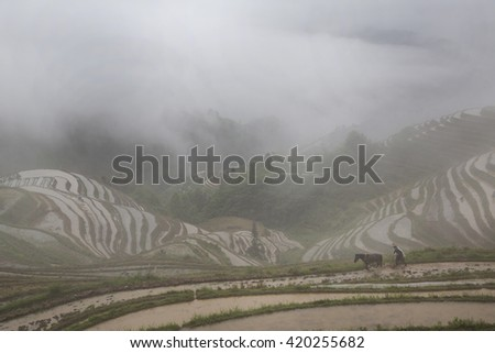 View of Longji rice terraces in Guangxi province at raining time, China
