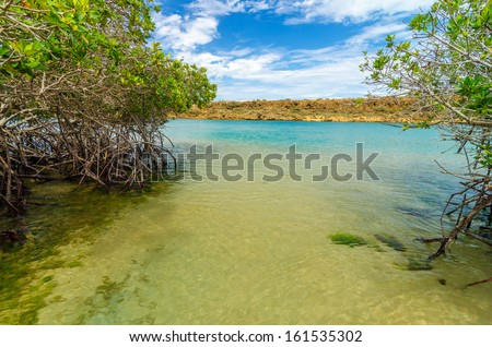 View of mangroves and coastline in La Guajira, Colombia - stock photo