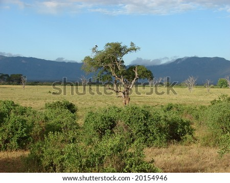 View of Masai savanna in the National Park - Tsavo. In the distant Kenya Mountains visible. Eastern Kenya - stock photo