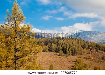 View of Mount sarlyks Altai and autumn forest