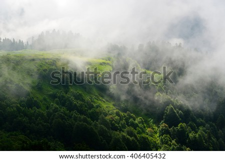 View of mountain forest tree landscape in haze. Forest of pine tree cloud. Pine tree. Tree in dark. Evergreen tree. Tree in haze. Green tree. Great tree. Tree and sky. View of tree. Amazing tree. Tree - stock photo