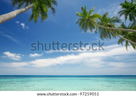 View of nice tropical  scene  with some palm - stock photo