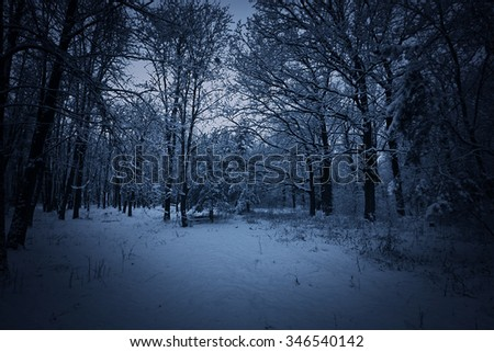 View of night winter park with snow - stock photo