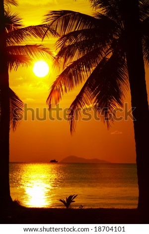 view of palm black outlines on the beach during sunset - stock photo