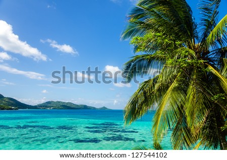 View of palm tree with Caribbean sea in the background in San Andres y Providencia, Colombia - stock photo