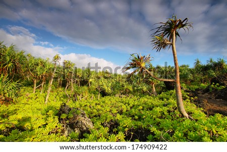 View of palm trees lush vegetation in Waianapanapa State park, Maui island, Hawaii, USA - stock photo