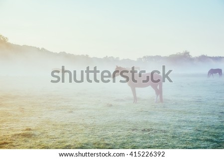 View of pasture with Arabian horses grazing in the sunlight. Dramatic scene and picturesque picture. Location place Carpathian, Ukraine, Europe. Beauty world. Soft filter. Instagram toning effect. - stock photo