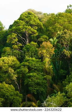 View of rain forest canopy - stock photo