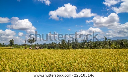 View of rice fields in Bali during a hot spring and cloudy day near Ubud during cyclo tour in balinese surroundings - stock photo