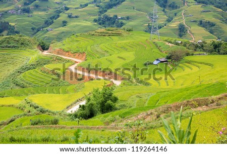 view of rice plantation valley and track in Vietnam