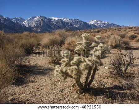 View of Sierra Nevada mountains - stock photo
