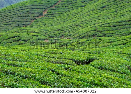 View of slope valley filled with tea plantations in Cameron Highlands, Malaysia. - stock photo
