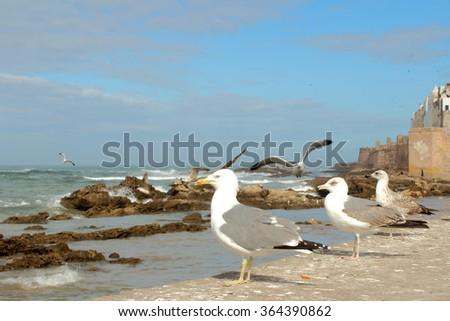 View of the Atlantic coast with sea gulls in Essaouria, Morocco. - stock photo