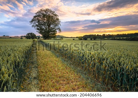 View of the beautiful landscape at sunset in England. - stock photo
