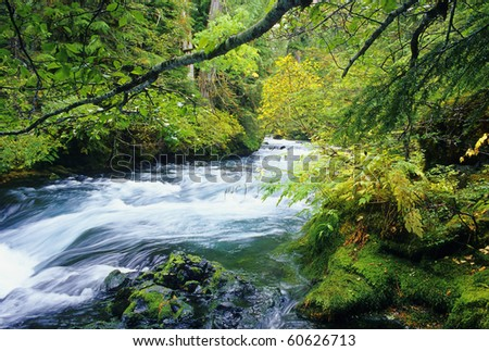View of the beautiful McKenzie River in central Oregon. - stock photo