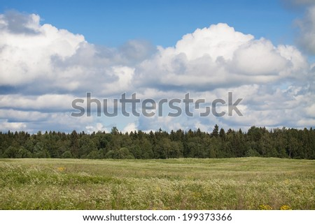 View of the beautiful summer meadow with flowers